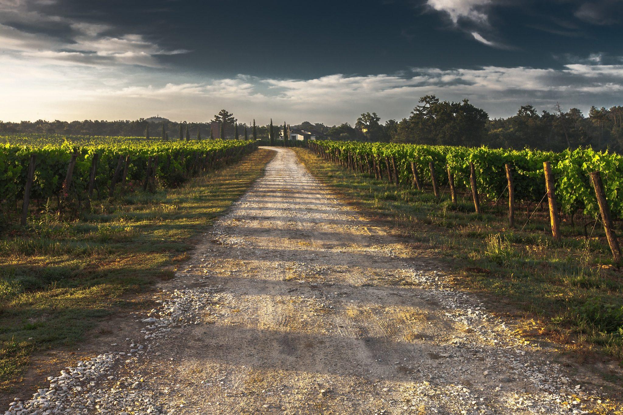selected-wine-sweden-vineyard